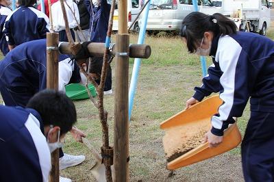 11/27(金)9年生土肥桜植樹